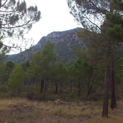 sierra-el-gavilan-2-400x400 Qué ver en Caravaca de la Cruz